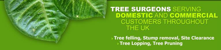 Tree Surgeon, Melbourne UK, Derby